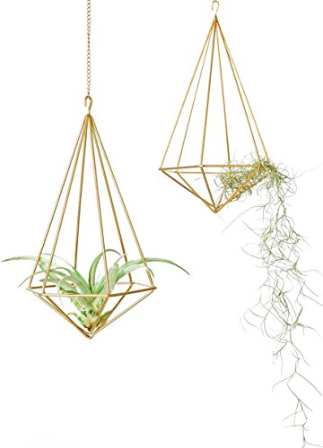 Mkono 2 Pcs Hanging Air Plant Holder Tillandsia Container Himmeli Wall Decor(with Chains), Gold