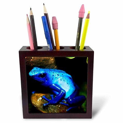 Frog Tile (3dRose Danita Delimont - Frogs - South America, Surinam. Blue poison arrow frog on rainforest floor. - 5 inch tile pen holder (ph_258546_1))