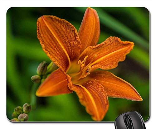Mouse Pad - Lily Daylily Garden Orange Flora Flower Garden