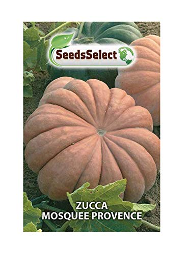 10 Semi//Seeds ZUCCA MOSQUEE PROVENCE