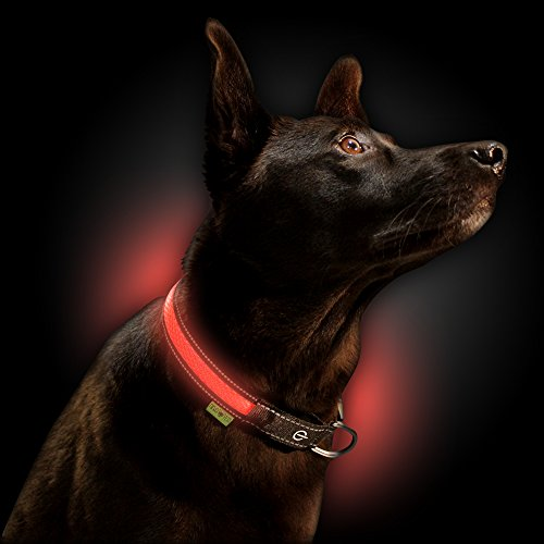 NINJA PETS Metal Buckle LED Dog Collar, USB Rechargeable, for Small Medium Large Dogs, Dog Collar Lights for Night Time Safety, Quick Release (Small, Wild Coral) ()