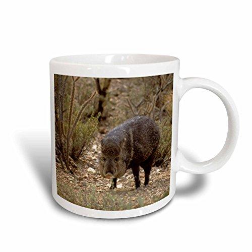 3dRose mug_88009_2 Arizona, Javelina Wildlife, Arizona-Sonora Desert US03 KWI0021 Kymri Wilt Ceramic Mug, 15-Ounce