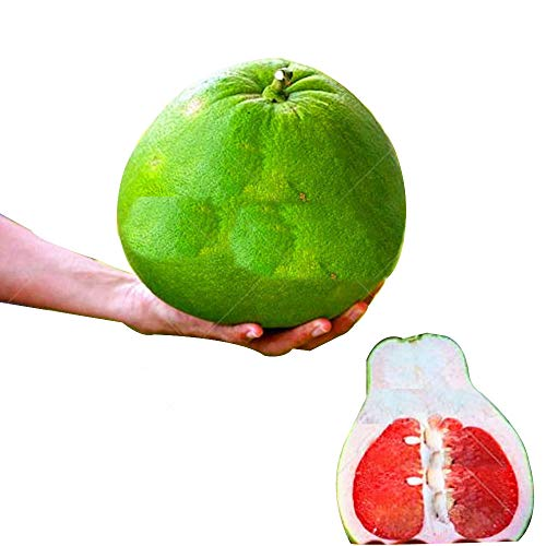 (20/Bag Hardy Mini Pummello Pomelo Pomello Tree Dwarf kao Pan Grape Fruit! Rare Bonsai Fruit Seeds for Home)