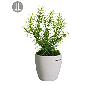 "11"" Rosemary in Ceramic Vase Green (Pack of 6) 16"