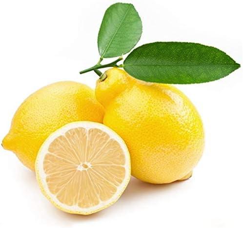 GEOPONICS Semillas: 100 pcs limon limonero exótico jardÃn de à ...