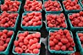 Plant a 20 Ft Row of Autumn Britten Everbearing Red Raspberries - Large & Sweet