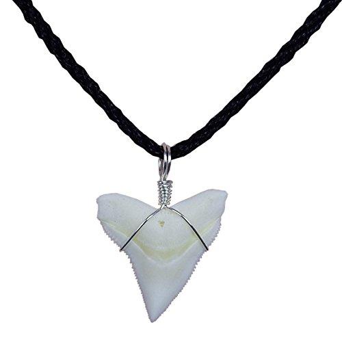 GemShark Real Bull Shark Tooth Necklace Sterling Silver Charm Pendant for Boys Girls Unisex (0.8 inch Bull Silver)