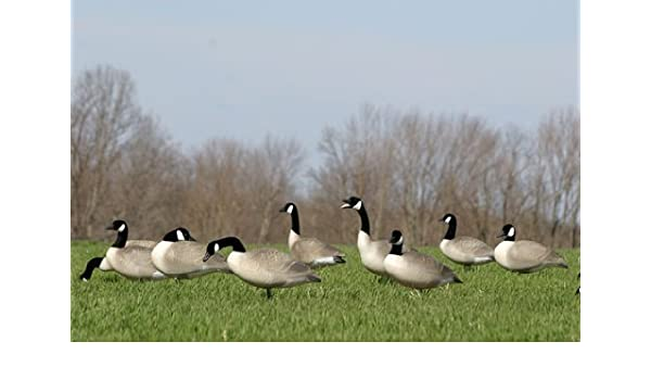 629ce0ed6f73 Amazon.com   Waterfowl Decoys   Accessories Flambeau 8990FBU Storm Front 2  Fullbody Canada Goose Field Decoy   Hunting Decoy Accessories   Sports    Outdoors