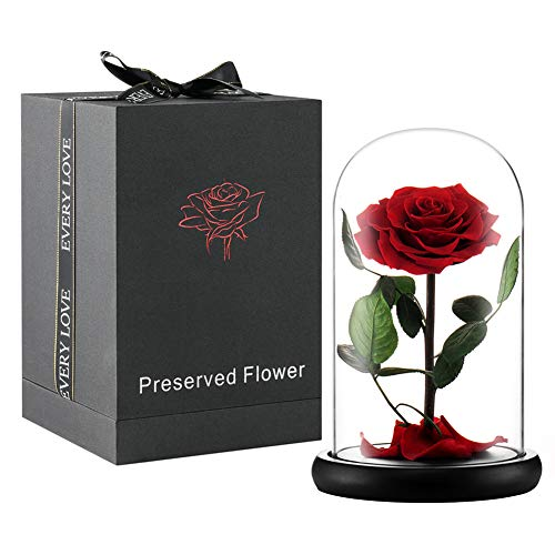 Puto Handmade Preserved Flower Rose with Real Fallen Petals - in Luxury Glass Dome with Wooden Base and Elegant Gift Box - Gift for Valentine's Day Mother's Day Anniversary -
