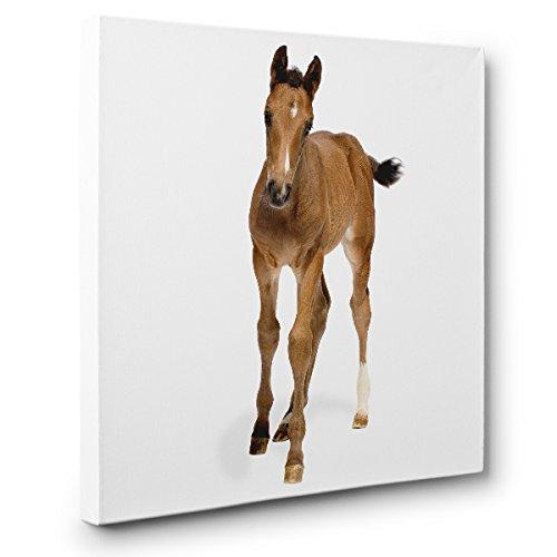 Horse CANVAS Wall Art Home Nursery Décor