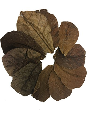 Indian Almond - Awesome Aquatics Betta/Shrimp Leaves 10 Premium Catappa Indian Almond Leaves natural habitat Tannin Producing improves immunity, prevents harmful bacterial growth EASY to USE