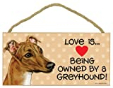 Love is being owned by a Greyhound (Brown color) 5