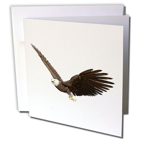 - 3dRose Boehm Graphics Bird - Bald Eagle Flying with Wings on the Upstroke - 12 Greeting Cards with envelopes (gc_253966_2)