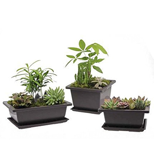 plastic bonsai pots - 7