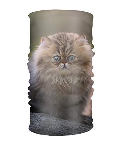 Animal Cats Kitten Fluffy Face Bandana Mask, Neck Balaclava and Sport Scarf Headband soft Sweatband