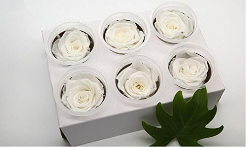 Ledyoung Preserved Fresh Flowers Handmade 5-6cm Big Fresh Roses with Box Never Withered Roses for Home Decor (White)