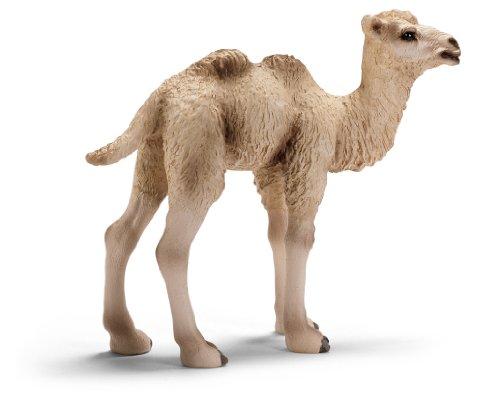 Camel Foal
