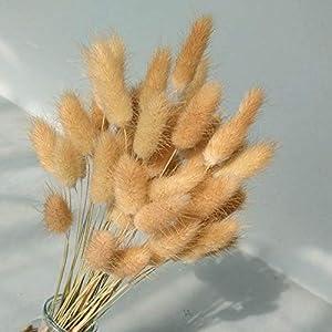 """50 Pcs Natural Dried Small Pampas Grass, Phragmites Communis, Foxtail Grass, Rabbit Dog Tail Grass, Dry Bouquet, Wedding Flower Bunch, 14""""-17"""" Tall Home Décor 1"""