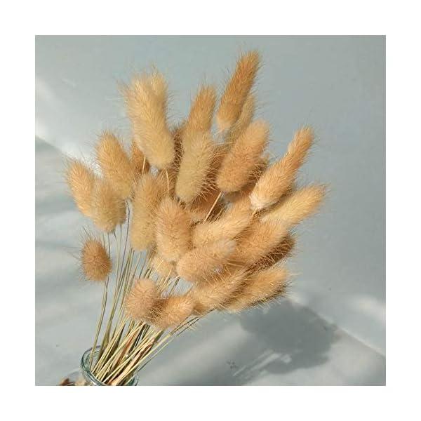 50 Pcs Natural Dried Small Pampas Grass, Phragmites Communis, Foxtail Grass, Rabbit Dog Tail Grass, Dry Bouquet, Wedding Flower Bunch, 14″-17″ Tall Home Décor