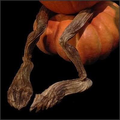 Pumpkin Vine Legs By Villafane Studios ()