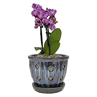 TRENDSPOT 5in Orchid Indoor Planter, 5 inch, Blue