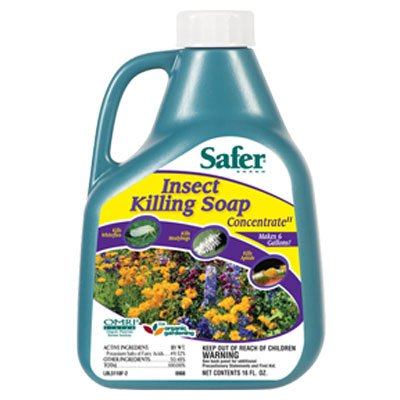 Insect Killing Soap, Concentrate, 16 (Insect Soap Concentrate)