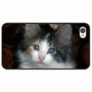 diy zheng Ipod Touch 4 4th Black Hardshell Case kitten sad sight Black Desin Images Protector Back Cover
