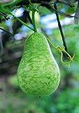 Long Gourd (Bau Dai) By Nga's Garden 20 Seeds per Package
