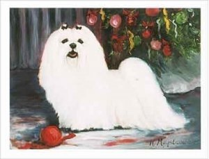 (Maltese Holiday Note Cards)