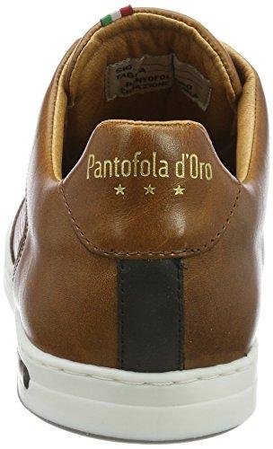 d'Oro Marrone Shell Low Premium Pantofola Tortoise Uomo Sneaker Auronzo 71ddwYq