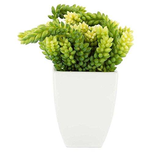 Houseplants for toddlers Sedum Morganianum