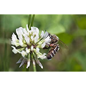 Nature's Seed Southern Subtropics Honey Bee Pasture Blend, 1000 sq. ft.