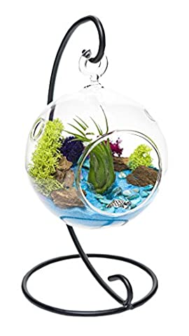"""Air Plant Terrarium Kit with Stand   Ocean Series Blue & Green   Complete Tillandsia Gift Set   4"""" Hanging Glass Globe and Stand   Nautical Crush Trading TM (Live Air Plant)"""
