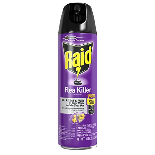 Raid Flea Killer for Home and Dogs, 16 Ounce, 6 Pack (Spray Killer Flea)