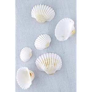 White Clam Shells 3 lb. - Excellent Home Decor - Indoor & Outdoor 108