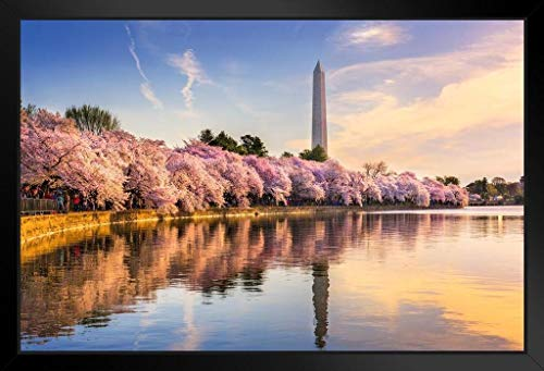 Washington DC Cherry Blossoms Monument Mall Spring Photo Framed Poster 20x14 ()