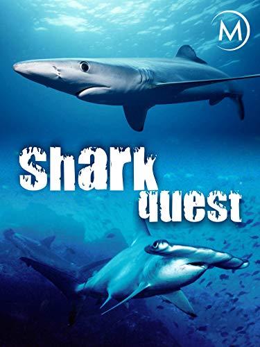 Shark Quest -