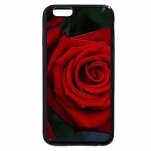 iPhone 6S Plus Case, iPhone 6 Plus Case, Queen of Red Roses