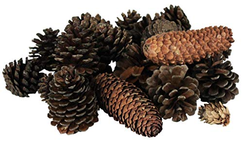 (Vita Domi Natural Brown Premium Pinecone Assortment 120 Pieces Per Bag (Assorted)