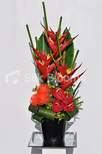 Exotic Red Bird of Paradise, Pin Cushion and Anthurium Fl...