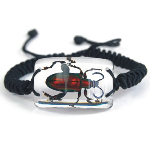Clear Lucite Rectangular Twisted Band Bracelet w/ Genuine Jewel Frog Beetle