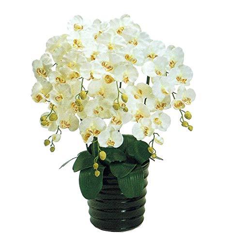 人工観葉植物 ピュアオーキッド7本立(ファレノ)クリームホワイト 光触媒加工 高さ78cm zv6700b (代引き不可) インテリアグリーン 造花 B07SYXZRBL