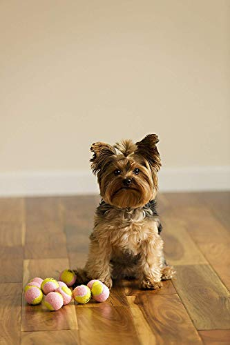Midlee X-Small Dog Tennis Balls 1.5 Pack of 12 (Pink/Yellow, 1.5 inch)