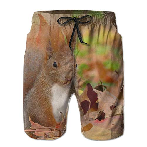 ZQKCMY Squirrel Grass Leaves Fall Fluffy Tail sit Mens Summer Swim Trunks 3D Graphic Quick Dry Funny Beach Board Shorts with Mesh Lining, Size XXL