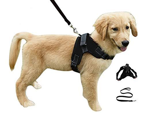 Heavy Duty Adjustable Pet