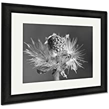 Ashley Framed Prints A Beautiful White And Brown Picasso Bug From West Africa, Modern Room Accent Piece, Black/White, 34x40 (frame size), Black Frame, AG6043411