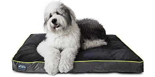 First-Quality 5' Thick Orthopedic Dog Bed | Pure Premium Memory Foam | (XL, Grey with Rave Green trim)