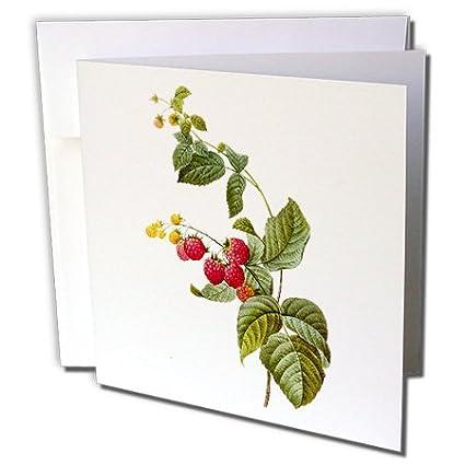 Amazon 3drose redoute vintage watercolor fruit raspberry plant 3drose redoute vintage watercolor fruit raspberry plant greeting cards 6quot x 6quot m4hsunfo