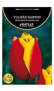 Bulbos - Tulipán Darwin rojo borde amarillo - Batlle