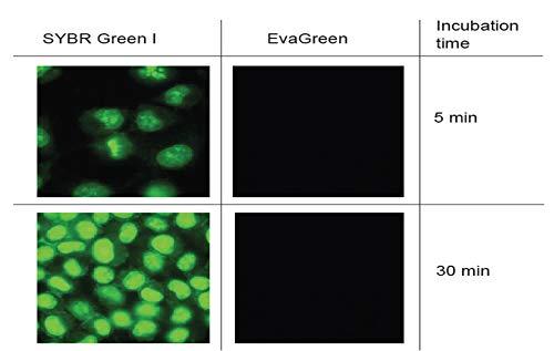 EvaGreen Dye, 2000X in DMSO (5 x 1 mL)